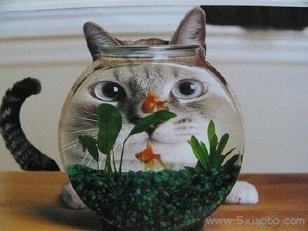 你除了责备猫,更应该责备自己  第1张