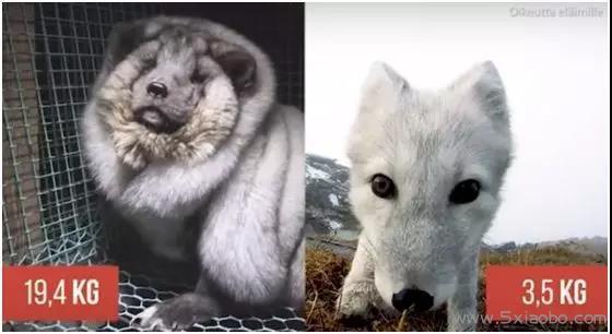 揭开人类最丑陋的一面:生而为人,我很抱歉  保护动物 第9张